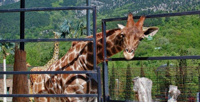 Зоопарк Ялта