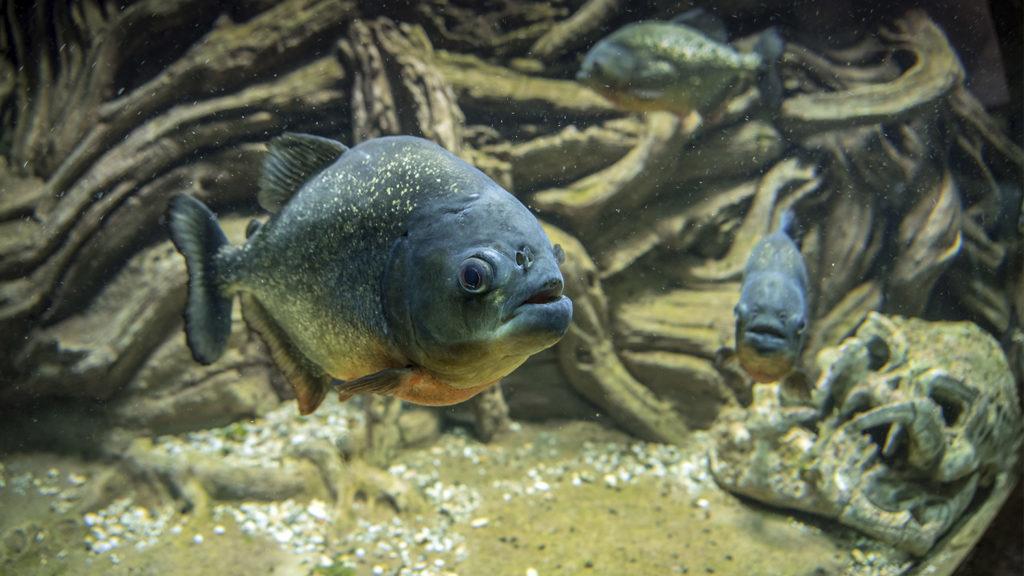 Музей в аквариуме Севастополя